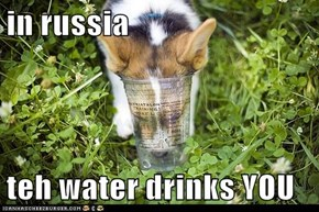 in russia  teh water drinks YOU