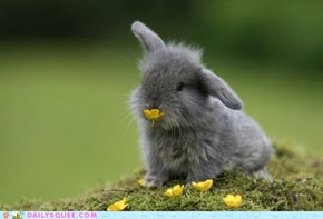 Daily Squee: Call Me Buttercup!