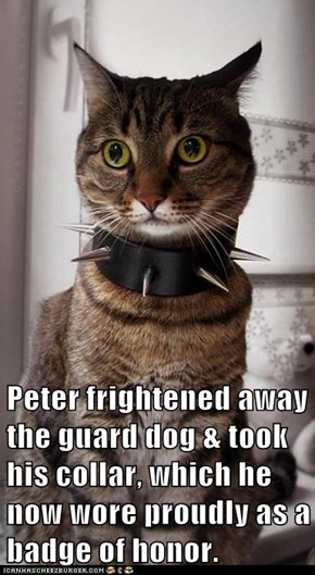 Peter frightened away the guard dog & took his collar, which he now wore proudly as a badge of honor.