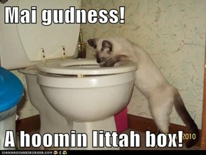 Mai gudness!  A hoomin littah box!