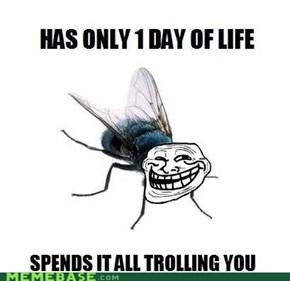 Trollfly