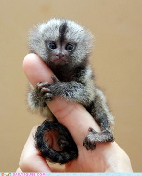Daily Squee: I'll Never Let You Go, Finger