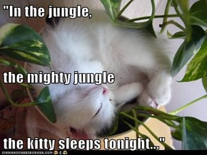 """In the jungle,  the mighty jungle the kitty sleeps tonight..."""