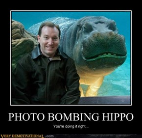 PHOTO BOMBING HIPPO
