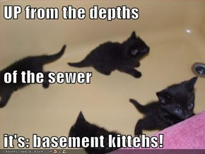 UP from the depths of the sewer it's: basement kittehs!