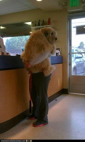 I Has a Hotdog: Somebody Doesn't Want to See the Vet...