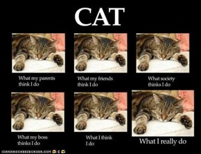 Cats: What People Think I Do vs. What I Really Do