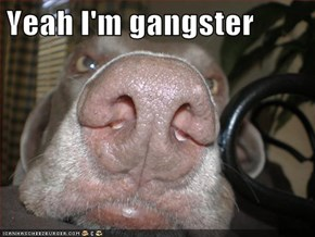 Yeah I'm gangster