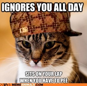 Animal Memes: Scumbag Cat - Destroy the Hoomin's Bladder!