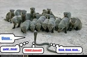 qwik!...think!