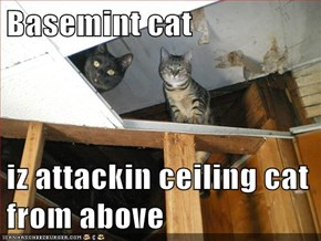 Basemint cat  iz attackin ceiling cat from above