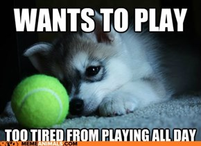 Animal Memes: First World Puppy Problems - To Play or Not to Play?  That Is the *ZZZZZZZZ*