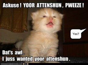 LOLcats: Askuse!