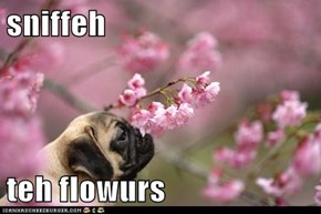 sniffeh  teh flowurs
