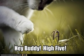 Hey Buddy!  High Five!