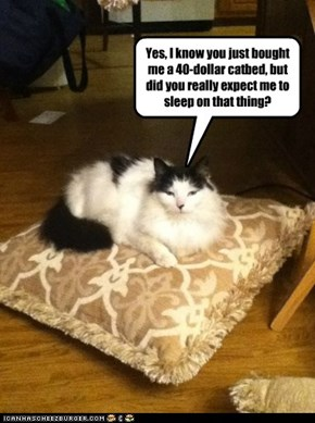 Yes, I know you just bought me a 40-dollar catbed, but did you really expect me to sleep on that thing?