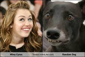 Miley Cyrus Totally Looks Like Random Dog