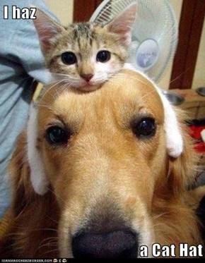 I haz  a Cat Hat
