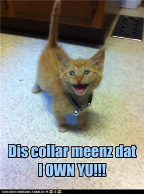 Dis collar meenz dat I OWN YU!!!