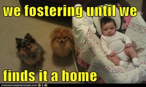 we fostering