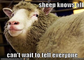 Sheep Saw What You Did