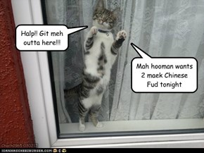 Chicken Chow Meow any one?