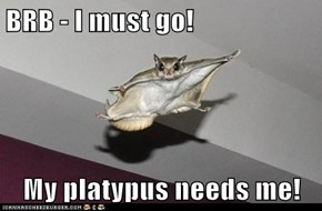 BRB - I must go!  My platypus needs me!