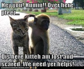 Hey you! Humin!! Over here, pleez...  Dis here kitteh am lost and scared. We need yer helps!