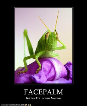 Even Insects Need to Express Frustration