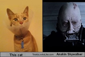This cat totally looks like Anakin Skywalker