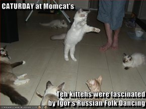CATURDAY at Momcat's  Teh kittehs were fascinated                                      by Igor's Russian Folk Dancing