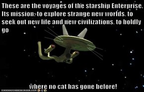 These are the voyages of the starship Enterprise. Its mission: to explore strange new worlds, to seek out new life and new civilizations, to boldly go   where no cat has gone before!