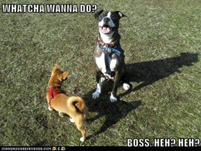 WHATCHA WANNA DO?  BOSS. HEH? HEH?