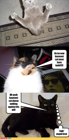 Ninja cat approaches