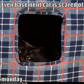 Even basement cat is scared of  monday