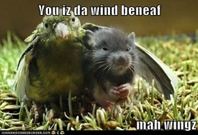 You iz da wind beneaf  mah wingz