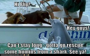 Hi Flip! Hey guys! Can't stay long - gotta go rescue some humins from a shark. See ya!