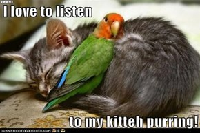 I love to listen  to my kitteh purring!