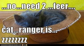...no...need 2 ...feer....  cat...ranger is... zzzzzzzz