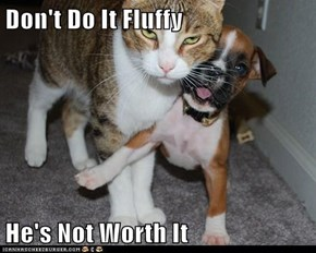 Don't Do It Fluffy  He's Not Worth It