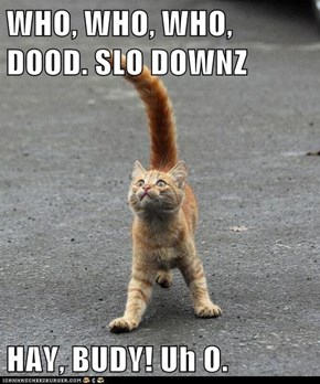 WHO, WHO, WHO, DOOD. SLO DOWNZ   HAY, BUDY! Uh O.