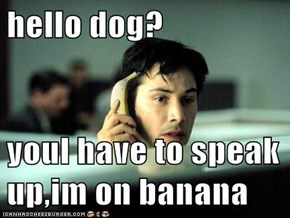 hello dog?  youl have to speak up,im on banana