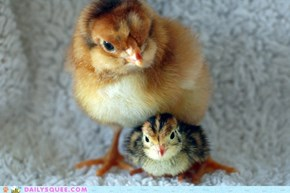 Reader Squees: Chickzilla