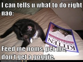 I can tells u what to do right nao:  Feed me noms, pet me, don't get a goggie.