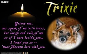 A Monday Night Candle For Our FurFriends Who Will Never Be Forgotten, And For Those Who Must Never Be