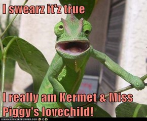 I swearz it'z true  I really am Kermet & Miss Piggy's lovechild!