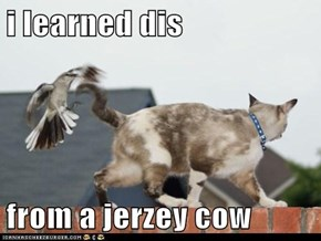 i learned dis  from a jerzey cow