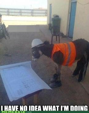 Donkey Wearing Sweatpants? Now I've Seen Everything