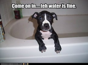 Come on in.....teh water is fine.