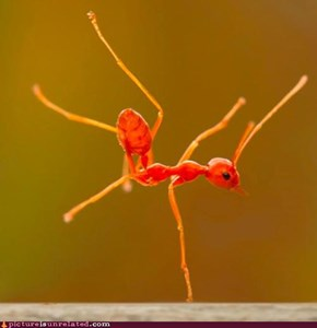 Ant Breakdancing